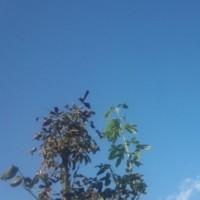 仙台の空10月20 日