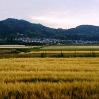 2017年5月17日:〈津屋崎の四季〉1175:田園景観