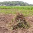 雑草もゴミも、た〜くさん!