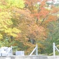 この時季、紅葉ー1- 旧バンビ温泉031012