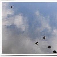 池で遊ぶ水鳥の親子。ビーズクッションの上でひっくり返るライナス。