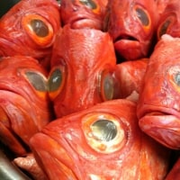 東大和ラーメン大冬樹 冷製麺販売終了日!