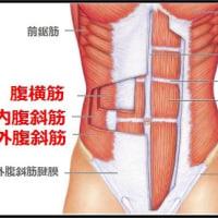 腹横筋のアプローチとつながり   金沢市  腹筋   シックスパック