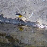 カワセミその他の野鳥