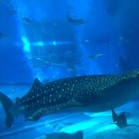 美ら海水族館&2日目のホテル…