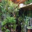 人工観葉植物 人気ランキング  造花ココーフラワー横浜