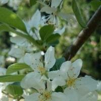 わが家の庭~4月~♪