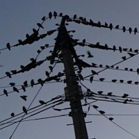 今年もムクドリの大群が・・・来年は羽ばたく一年に