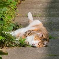 あーあーあー、お行儀悪い A bad manner cat