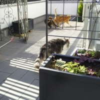 猫ベランダ