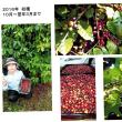奄美で国内産コーヒーの2つの動き/鹿児島の話題・情報