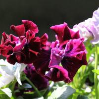 3/38 今日の花たち