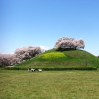 埼玉古墳公園の桜
