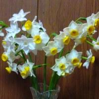 水仙の花の数