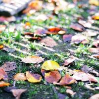 秋の、、ふぉと。。。