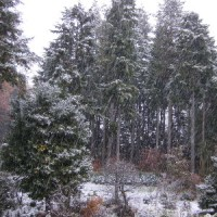永劫なる魔力による吹雪。