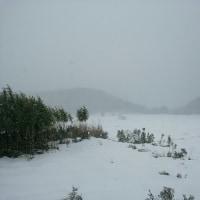 また雪です・・・