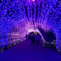 江の島 湘南の宝石・イルミネーション