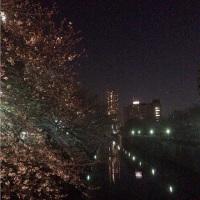 夜桜見物@目黒川