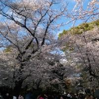 札幌では一枝買ってきて部屋で花見酒にしようかしら