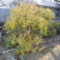 冬・庭の木々たち・・・いわき