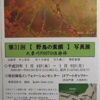 大栗川PHOTO倶楽部 写真展 【野鳥の素顔】 の御案内
