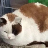 野良猫の90度ちゃん 05 Feb. 2017
