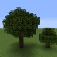植林の際、あえて違う木も入れると聞いたことがある