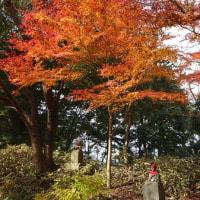 紅葉の高尾山(1)