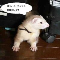 日本は広い(T_T)