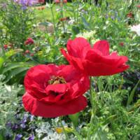 5月のお花  その2