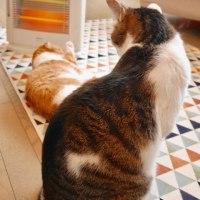 ネコとストーブ