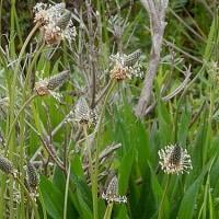 花冷え 春の野草 はや実になって 季節は回る