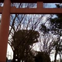 大宮【氷川神社】にて厄払い