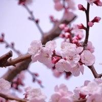 3/25 梅の花