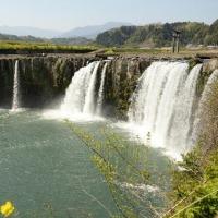 チューリップ満開の原尻の滝です
