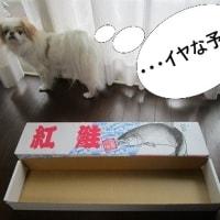 たかが箱 されど箱 出来るコと出来ないコの違い (-_-;)