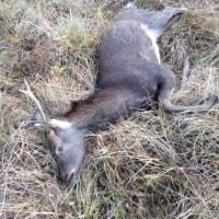 11月24日の狩猟