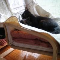 お昼寝(*ΦωΦ*)わが家のお猫様