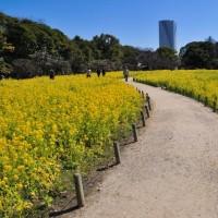 この日も浜離宮庭園には外国の観光客が多かったですよ。 (Photo No.11810)