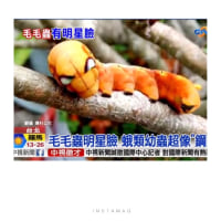 台湾での生活~面白い虫