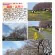 花巡り 「桜-その407」 蓮田・元荒川