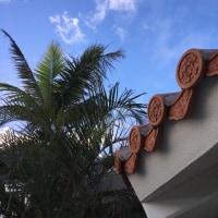 南ぬ島のオーロラキツネ2