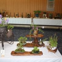 「春の山野草と盆栽展」を作品紹介   ⓶