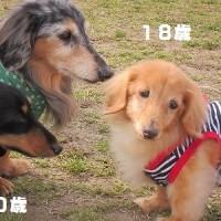 愛しい老犬たち~