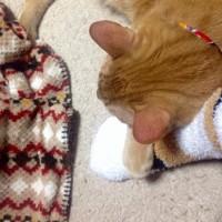 もこもこ靴下+茶トラ猫