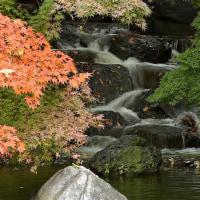 鶴見緑地の秋