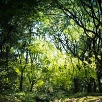 【Apr_24】下鴨神社は新緑の季節