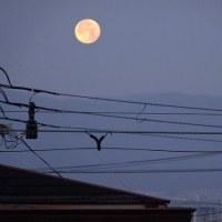大きな月!