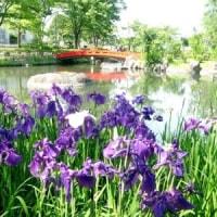 渋川・小野池紫陽花公園訪問 H-29- 6-19